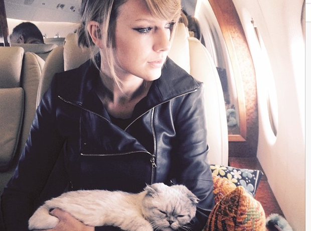 Taylor Swift and Cat Instagram