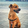 Image 8: Rachel Platten's Dog Dino