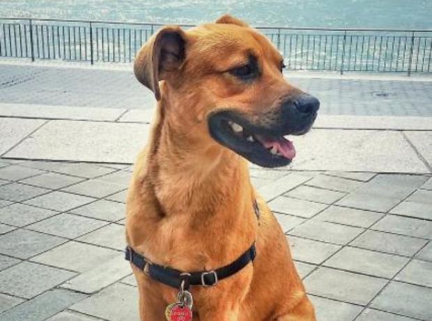 Rachel Platten's Dog Dino